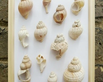 Nautical Wall Hanging Framed British Beach Shells Home Decoration