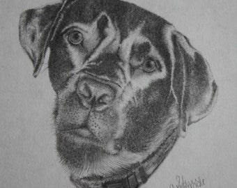 Dog drawing, Print from the original art work; 8 1/2 x 11