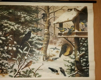 Vintage Songbirds in Winter Pull Down Chart-Germany Mid Century