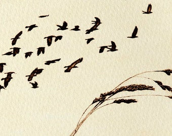 Original etching: 'Rooks over Beacons Batch', hand-printed from a solar plate. Limited edition.