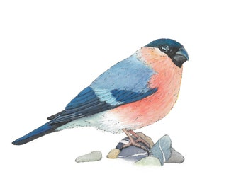 Bullfinch, Watercolor Bird Art, cool wall art, gallery wall art, cute bird art, bird painting print, simple wall art