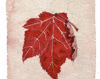 Maple Leaf #1