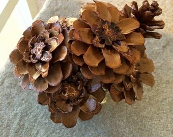 One of a kind Pine Cone Flowers by the Dozen