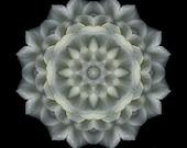 Softeness of Moonlight - White Rose Spiritual Mandala Art