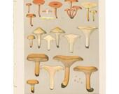 Antique 1895 mushroom print by CHARLES PECK, Plate 28, botanical, fungi, vintage chromolithograh print