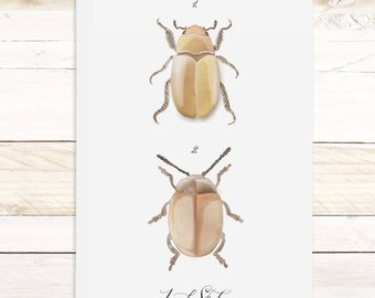Insect Study - Haven Collection / Watercolor jewel beetle wall hanging, wood trim art. Scientific Canvas Posters Chart - More Options VPR08