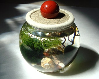 Zen. Garden. Sphere. Stone Top. Marimo Ball. Unique. Terrarium with Choice of Gemstone Sphere