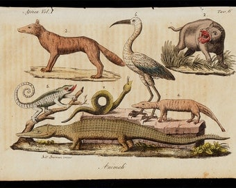 1823 Antique print of animals and plants from Africa, African fauna, crocodile, hippo, lizard, fine hand colored engraving 193 years old