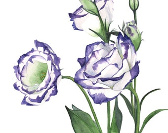Lisianthus print of watercolor painting 5 by 7 size, lisianthus watercolor painting, lisianthus painting print, botanical illustration L9516