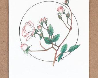 rose   original drawing in watercolor pencil & ink