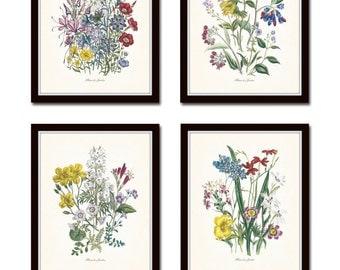 Fleurs de Jardin Print Set No. 16, Botanical, Print Set, Wall Art, Giclee, Art Print, Vintage Botanicals, Wildflower Print, Flower Prints