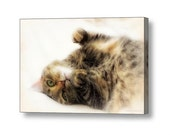 Cat Napping Sleepy Kitty Cat Dreamy Adorable Feline Fine Art Photography Giclee Gallery Wrap Canvas