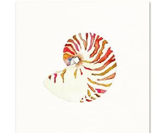 Nautilus Shell.