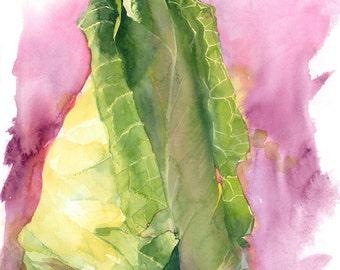 Brassica cabbage, Watercolour Giclée print
