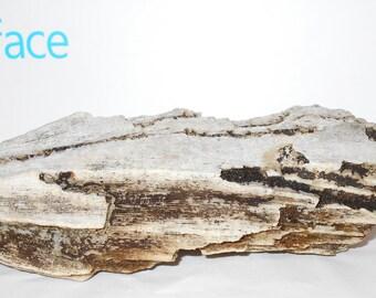 Huge coral vintage Florida unbleached natural ocean find