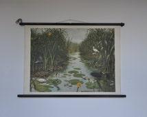 Authentic Vintage Pull Down School Chart. Wetland. Swamp. Pond. Waterfowl. Frog. Bird. Mid Century Poster. 1165