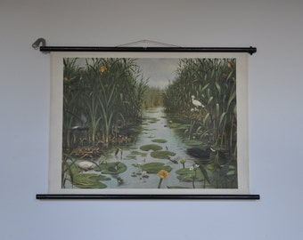 RESERVED Authentic Vintage Pull Down School Chart. Wetland. Swamp. Pond. Waterfowl. Frog. Bird. Mid Century Poster. 1165