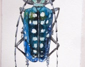 Insect Art/ Blue Beetle illustration/ Watercolor painting original only/ Nature art/ Home and Living/ Unisex gifts OOAK