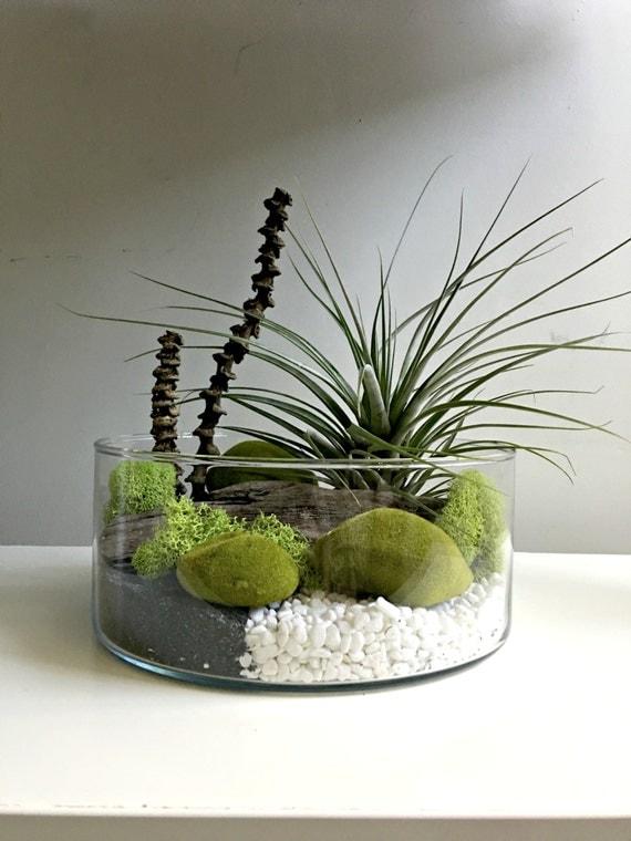 large air plant terrarium glass vase living decor diy kit. Black Bedroom Furniture Sets. Home Design Ideas