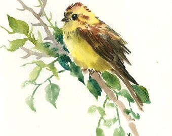 SongBird artwork Yellowhammer, Original watercolor painting, 10 x 8 in, bird lover, bird painting