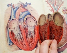 Anatomy model manikin paper dissection heart human body pull out nude body pop up medical chart color vintage antique