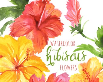 Watercolor Hibiscus Flowers Tropical Flower Clipart Hawaiian Florals Floral