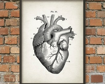 Heart Anatomy Wall Art Poster - Vintage Heart Book Plate Illustration Print - Antique Heart Diagram Poster - Human Biology Student Gift Idea