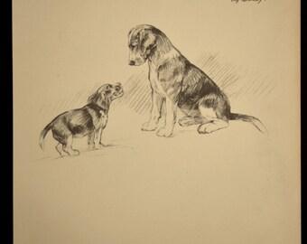 Beagle Print Dog Print Beagle Puppy Drawing Illustration Plate