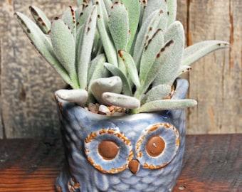 Planter - Owl Planter - Owl Collectible - Ceramic Owl - Ceramic Planter - Succulent Planter - Hoot Owl - Ceramic Planter, Houseplant