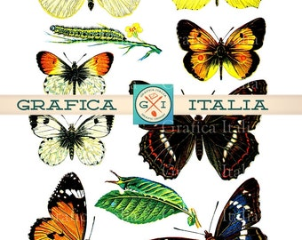 BUTTERFLY Collage Sheet - 10 Beautiful VINTAGE Butterflies Digital Download Printable Clipart Graphic Design Elements Images 001