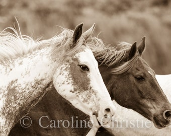 "Wild Horse Photography,Equine Photos, Sepia Tone, Mustangs. Black Stallion. ""Just the two of us"""