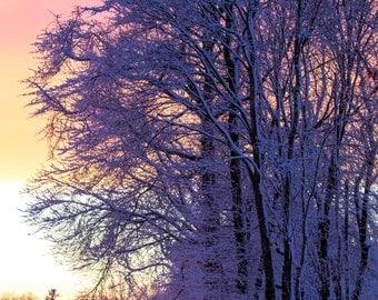 Winter ~ Warwick Neck, Rhode Island, Sunset, Art, Artwork, Photograph, New England, Snowy Trees, Winter Scenes