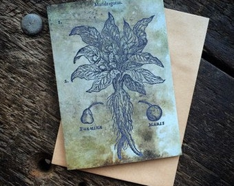 Mandrake, Witchcraft Antique Botanical Print, Witch Herbs, Book of Spells, Wiccan Altar, Witch Home Decor, Luxury greeting card.