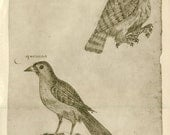 Vintage Birds Print, Owl, from a 17th Century Sketch Drawing by Frei Cristovao de Lisboa