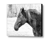 Black Horse Winter Snow Horse Lover's Art Equine Equestrian Black and White Fine Art Photography on Giclee Gallery Wrap Canvas
