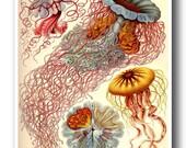 Colorful Jellyfish Poster, Jellyfish Art Print Haeckel Print, Nautical Art Nouveau Wall Art, Beach Art, Coastal Living, Marine Life Wall Art