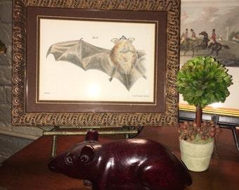 c. 1870 BATS FRAMED LITHOGRAPH - original vintage print - halloween decoration - pipistrelle - chauve souris - ready to hang