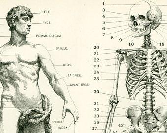1897 Anatomy Human Body Parts Encyclopedia Larousse medical home decor wall art vintage