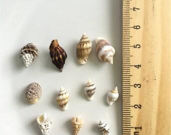 50pcs 1-2cm  Nature Conch Shell  Mininature Figurine