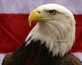 bald eagle, photo, print, photograghy, home decor, wall art, wildlife, nature, American flag, nature photography, free shipping