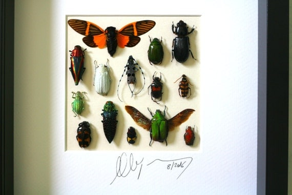 Shadow box with real insects : Topquality frame with mosaic of insects of the world FREE SHIPPING