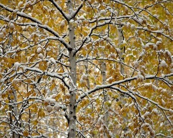 Autumn's Winter - Signed Lustre Print