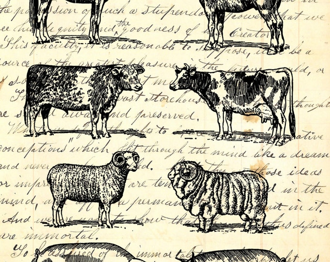 Livestock study art print farmhouse decor vintange antique rustic farm custom choice background from antique paper LSF2076