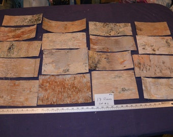 Unique Birch Bark Sheets Related Items Etsy