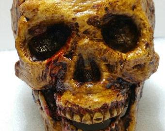 Small Skull Corpse Halloween/ Horror Prop