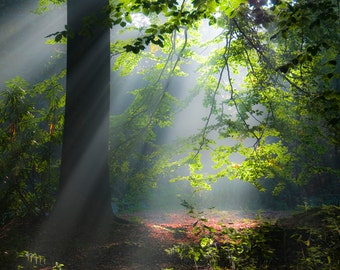 Forest Sunlight by Christopher Mills - A4, A3 or A2 Fine Art Giclee Print | Nature Photography - Landscapes/Trees/Woodland