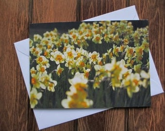 Flower Greetings card C5 - Daffodils