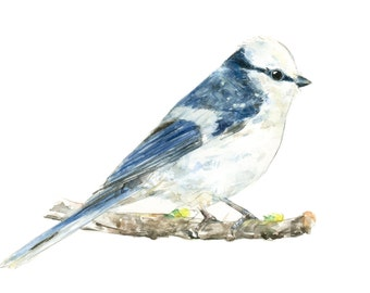 Azure Tit watercolor painting - bird watercolor painting - 5x7 inch print - 0060