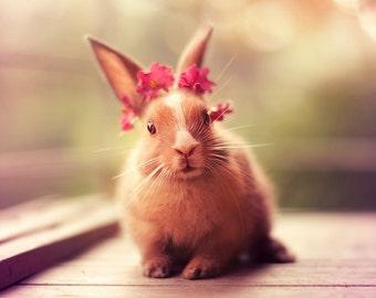 8x10'' beautiful adorable cute baby bunny portrait photography art print