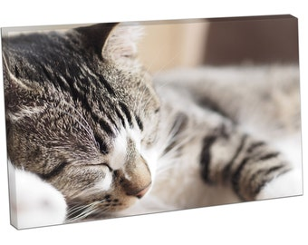 CAT Pets Kitten sleeping Print on canvas XT2633